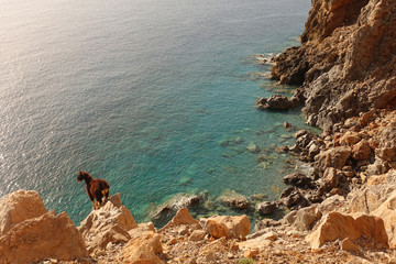 Photo of wild goat on the road to iconic Balos lagoon in natural preserve area, Crete island, Greece