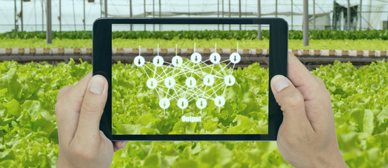 Wall Mural - smart agriculture with technoloty concept, farmer use deep learning with artificial intelligence to classification, regression, and clustering. In farming, they are used to predict yield and quality