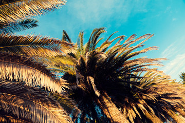 Palm trees and summer blue sky in Greece Abstraction Selective focus