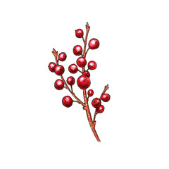 Christmas berry holly or ilex. Red xmas branch with red berries. Winter aquifolium leaves decor. Christmas berry traditional symbol