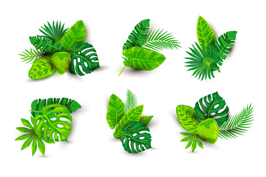 Tropical exotic leaves vector illustrations set isolated on white background. Design element with shadow for poster, web, flyers, invitation, postcard, t-shirt design.
