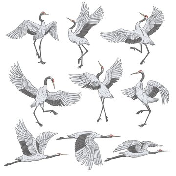 Set of white cranes in different positions