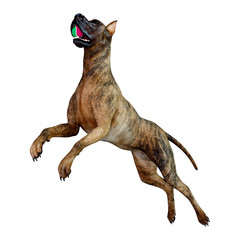 3D Rendering Brindle Great Dane Dog on White