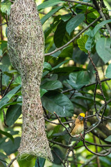 Fototapeten Pfau Bird park Taman Burung in Kuala Lumpur