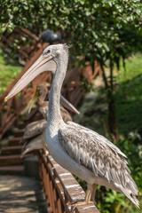 Poster Ostrich Bird park Taman Burung in Kuala Lumpur