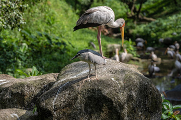 Poster Owl Bird park Taman Burung in Kuala Lumpur