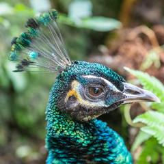 Foto auf Acrylglas Pfau Bird park Taman Burung in Kuala Lumpur