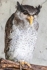 Fototapeten Straus Bird park Taman Burung in Kuala Lumpur