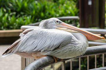 Garden Poster Ostrich Bird park Taman Burung in Kuala Lumpur