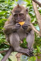 Foto auf Acrylglas Pfau apes in Taman Burung bird park