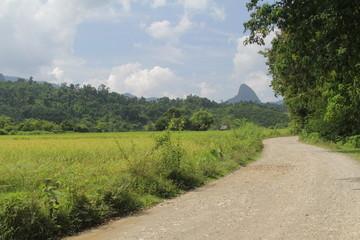 romatische Reisfelder