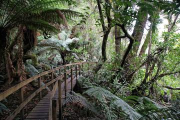 Abenteuerbrücke im Wald