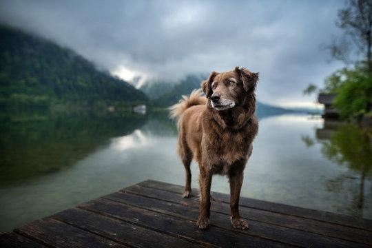 Dog at a beautiful wooden bridge. Dog at the lake. Foggy mood between moutains.