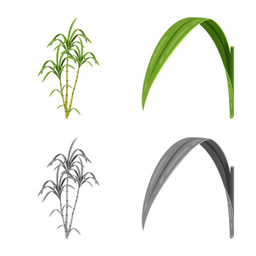 Vector design of farm and agriculture  sign. Collection of farm and technology stock symbol for web.