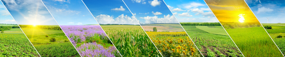 Green field and blue sky with light clouds. Collage.Wide photo.