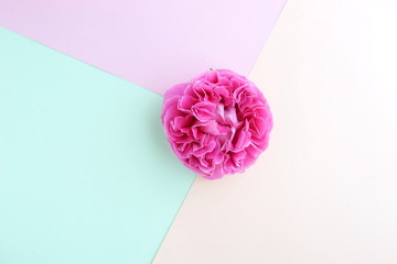 Abstract geometric paper background. green pink trend colors and pink rose. Minimal fashion mock up...