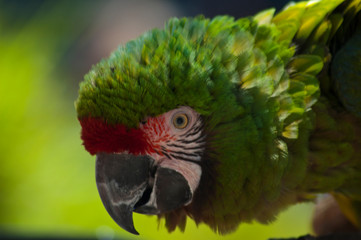 Pickels the Green Parrot helps out at with the LA Zoo conservation efforts by collection money for donations after the bird show