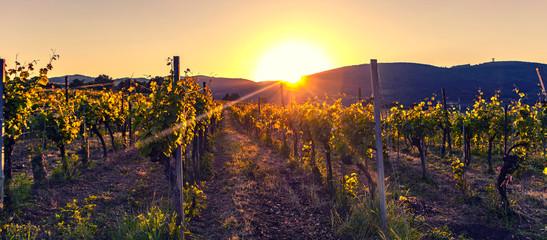 beautiful sunset in vineyards landscape