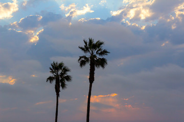 palm trees and colorful sky with dramatic sky