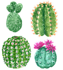 Clipart set with green cactuses blooming with pink flowerses blooming with pink flowers, hand drawn watercolor illustration isolated on white