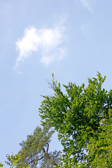 Tree leafs in sky background best quality