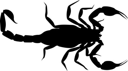 scorpion tattoo silhouette logo isolated on white background