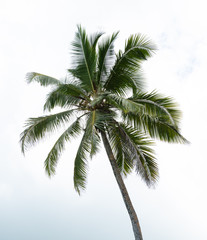 Coconut Palm Tree Against Sky