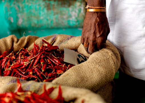 Seller's Hand On A Burlag Bag Full Of Chillis In Market, Trichy, India
