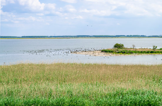 Summer landscape with lake and marshy shore. Islands for birds in a nature reserve in Holland. Nationaal Park Nieuw Land in the Dutch Provincie Flevoland.