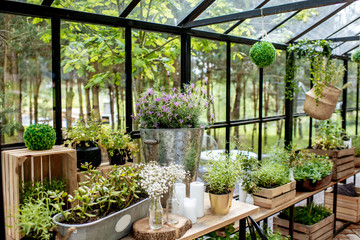 Beautiful herbs and flowers in the greenhouse Fototapete