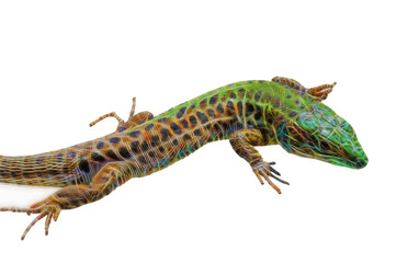 fractal picture of Lizard