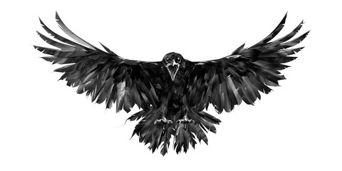 painted portrait of a raven on a white background in front with a wingspan