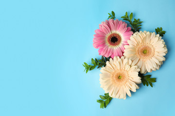 Fotorolgordijn Gerbera Flat lay composition with beautiful bright gerbera flowers on color background, top view. Space for text