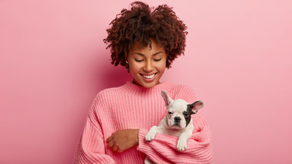 Little black and white dog with owner play together and have fun. Afro girl has curly hair poses with small pet against pink background, going to groomer. Funny bulldog has black nose and ear