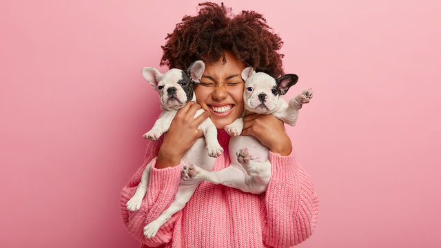 Photo of joyful dark skinned lady with Afro haircut, feels fun, carries two little french bulldog puppies, expresses affection, have good relationship, owner feels responsibility. Pedigree pets