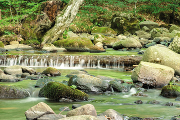 refreshing stream in the forest. beautiful nature scenery in summertime. mossy rocks among the brook. trunk in the water form a small cascade