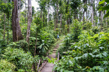 Syndicate Nature Trail Views around the caribbean island of Dominica West indies