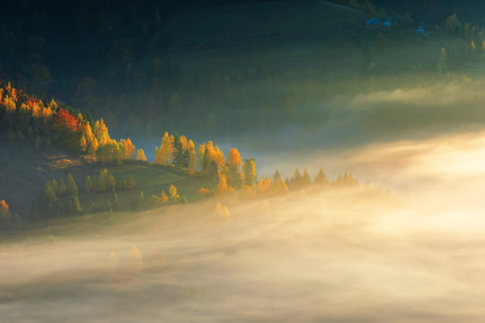 glowing fog at sunrise in mountains. wonderful autumn nature background. mixed forest on near on the hill. colorful nature background. matisesti area of apuseni national park, romania