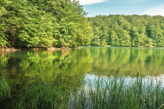 beech forest reflection in the lake. calm nature scenery on a sunny day. great summr vacation. protect green environment concept. location vihorlat mountains, slovakia
