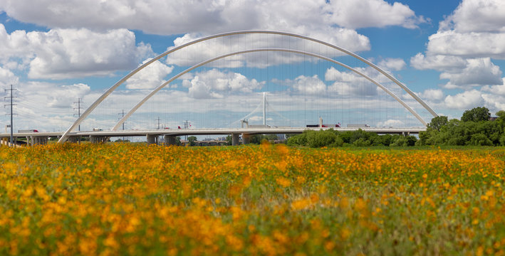 Margaret McDermott Bridge and Wildflowers in Dallas Texas