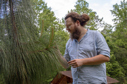 Young man in forest inspecting a young long-leaf pine tree. Relaxed hipster with beard and ponytail in a natural environment.