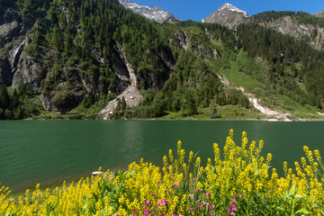 Wall Mural - Alpine lake spring summer landscape with yellow flowers in foreground Stillup Lake Austria Tyrol