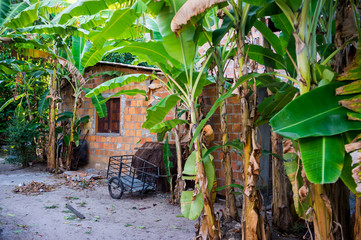 Quiet view of rural Brazilian countryside village with banana trees lining a sandy lane in Bahia,...