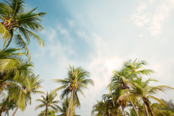 Fototapete - Palm tree on tropical beach with blue sky and sunlight in summer, uprisen angle. vintage instagram filter effect