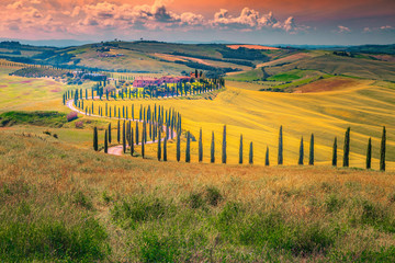 Foto op Canvas Meloen Idyllic Tuscany landscape at sunset with curved rural road, Italy