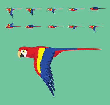 Animation Macaw Flying Cute Cartoon Vector Illustration