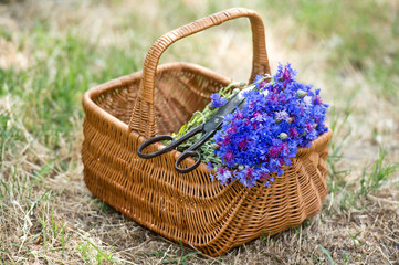 Aluminium Prints Picnic Flowers blue cornflowers in a wicker vintage basket.