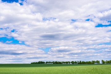 picturesque view of green field with white fluffy clouds on blue sky at sunny day