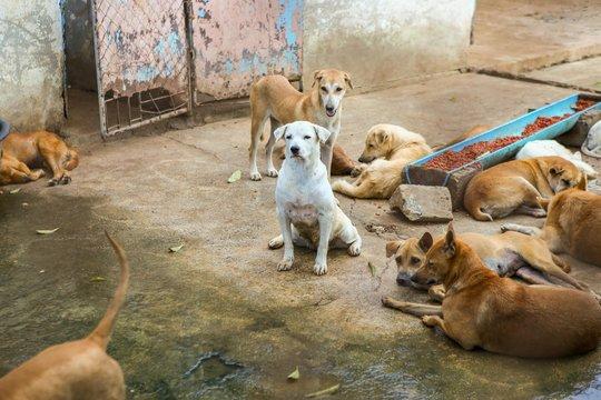Thai dog , dog  in the garden