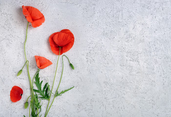 Poster Poppy Wild red poppy flowers on light concrete background. Top view with copy space.